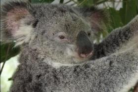 100619_Brisbane_Lone Pine Koala Sanctuary_d363-34.jpg