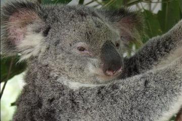 100619_Brisbane_Lone Pine Koala Sanctuary_d363-34